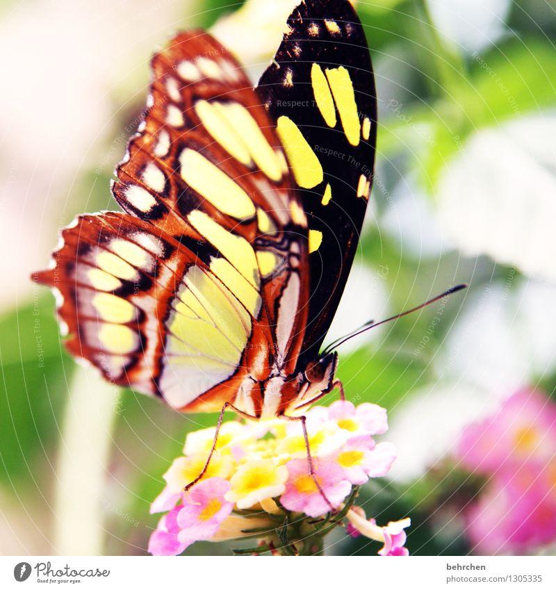 schmetterling am morgen... Natur Pflanze Tier Frühling Sommer Schönes Wetter Blume Blatt Blüte Garten Park Wiese Wildtier Schmetterling Flügel 1 Blühend