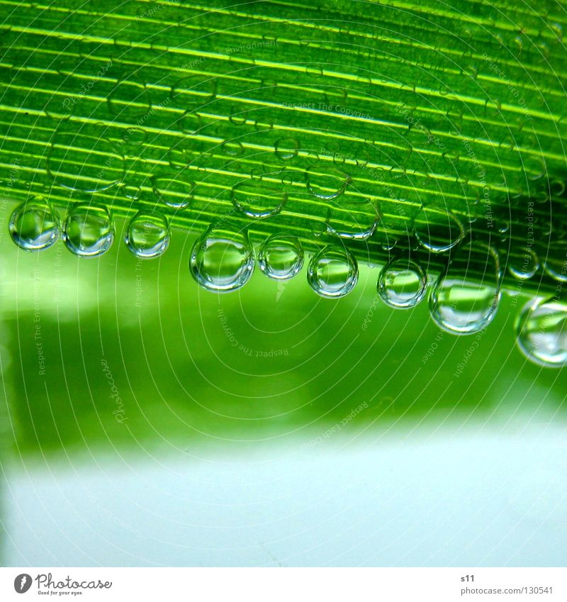 NaturBlubbies grün Leben Blatt Streifen hellgrün Pflanze frisch kalt Blubbern nass rund Klarheit Mineralwasser Luft Erfrischung rein Kraft Makroaufnahme