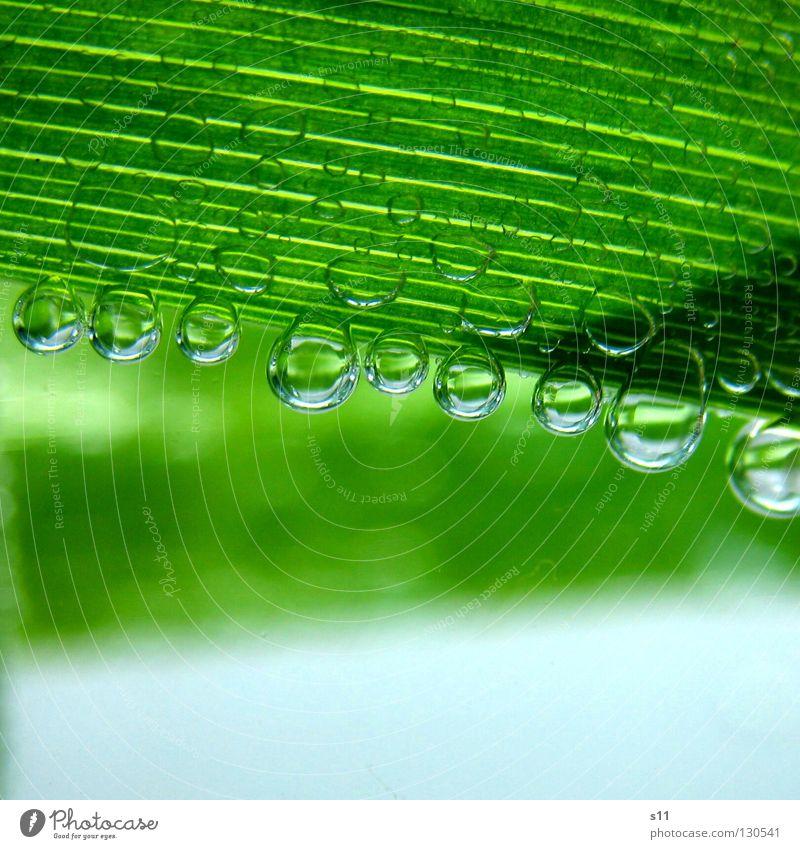 NaturBlubbies Natur Wasser grün Pflanze Blatt Leben kalt Luft Linie hell Kraft Gesundheit Glas nass Wassertropfen Kraft