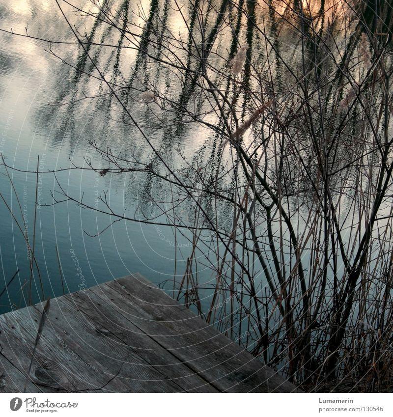 Ophelia Winter Wasser See Holz Traurigkeit dunkel Einsamkeit Vergänglichkeit Wasseroberfläche Steg Geäst Unterholz durcheinander Sonnenuntergang Ast Zweig Abend