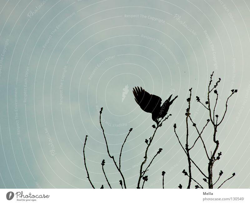 Eine Frage des Gleichgewichts Baum oben Zufriedenheit Vogel Wind Perspektive Sicherheit Aussicht Körperhaltung Flügel Ast Spitze Sturm festhalten Leidenschaft Baumkrone
