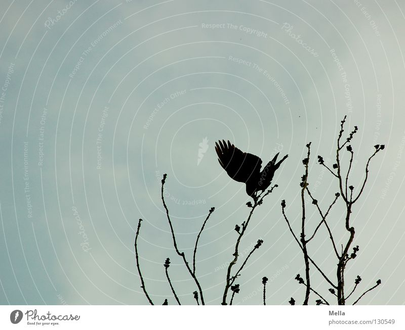 Eine Frage des Gleichgewichts Baum oben Zufriedenheit Vogel Wind Perspektive Sicherheit Aussicht Körperhaltung Flügel Ast Spitze Sturm festhalten Leidenschaft