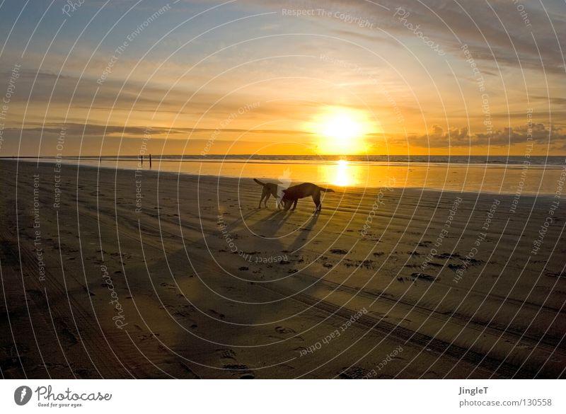 nicht allein III Strand Küste See Meer Gewässer Meerwasser Gezeiten Ebbe Wolken braun schwarz Wellen Brandung Reflexion & Spiegelung Abenddämmerung Schatten