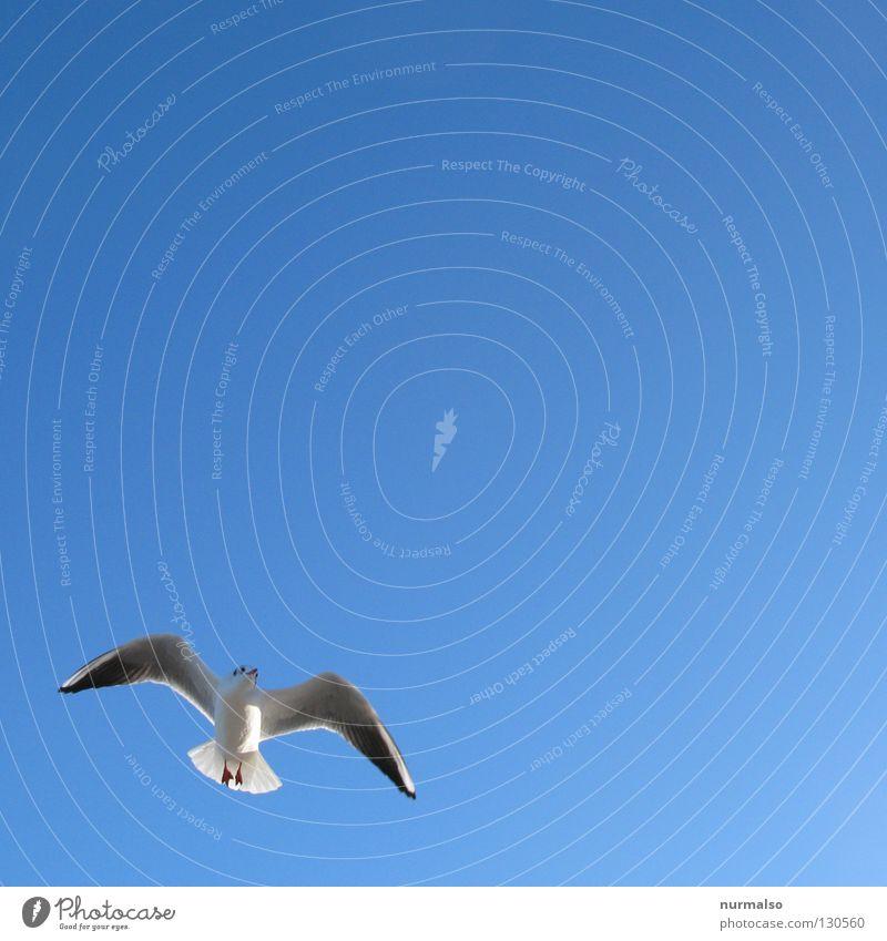 Morgenmöwe weiß Meer blau Sommer Strand Ferien & Urlaub & Reisen Gefühle See Sand Wasserfahrzeug Vogel Wind frisch Freizeit & Hobby Kot Möwe