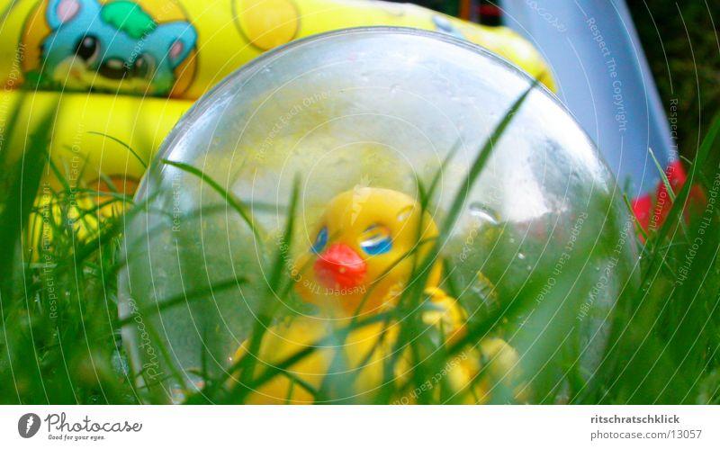 ausgebuechst Gras Rasen Dinge Ente Planschbecken