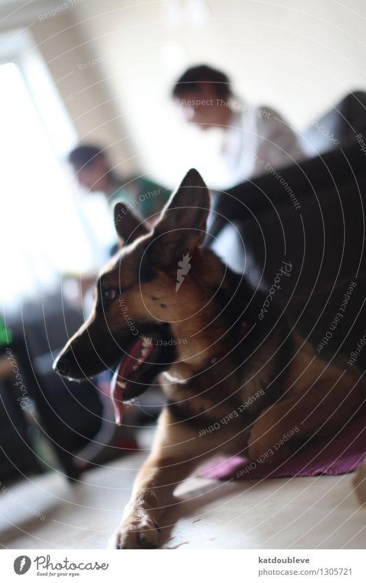 Mila Hund Tier Ferne sprechen Glück Freiheit Zusammensein Freundschaft Wohnung liegen Zufriedenheit Freizeit & Hobby Häusliches Leben warten Kommunizieren