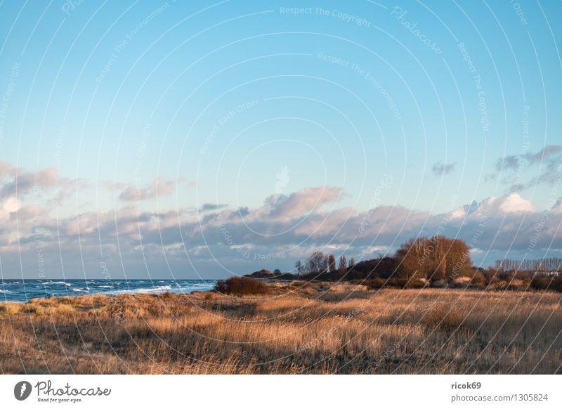 Blick auf die Ostseeküste Erholung Ferien & Urlaub & Reisen Strand Meer Wellen Natur Landschaft Wasser Sturm Küste Holz Romantik Idylle Tourismus Buhnen Düne