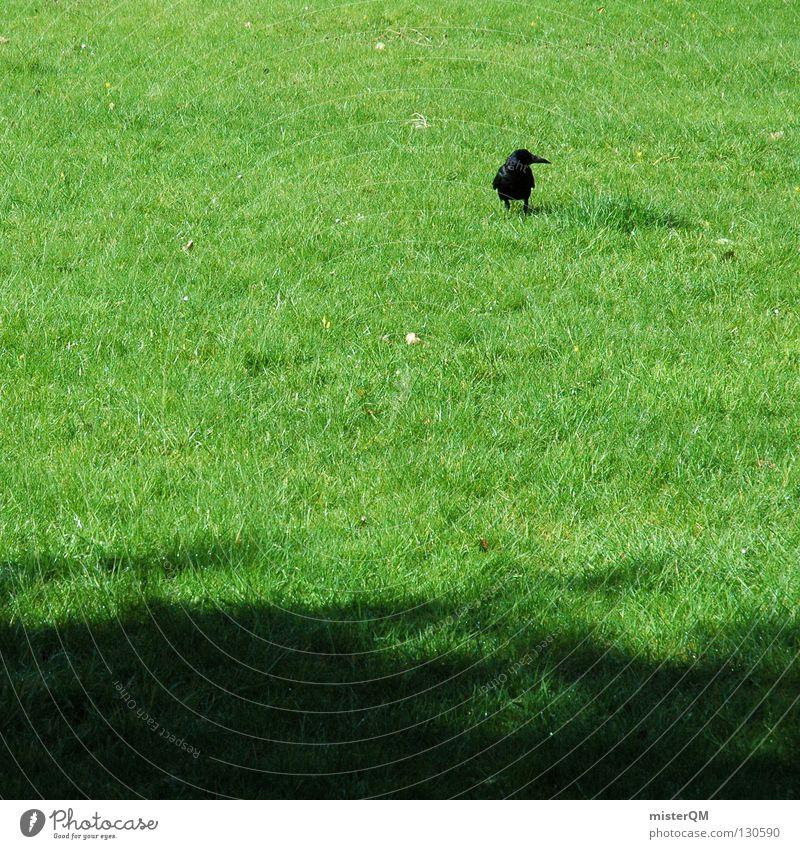 Morgenspaziergang. Vogel Wiese grün schwarz Gras Halm Spaziergang Tier Pirsch Beutezug Raabe Raaben Rasen Schatten animal Ausflug raabenschwarzer Graffiti