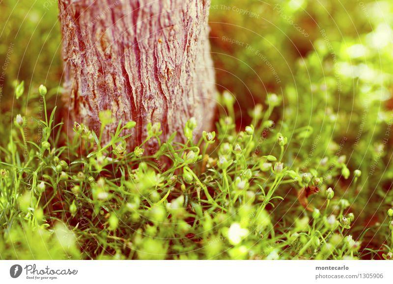 grün satt Umwelt Natur Pflanze Baum Moos Blatt Blüte Grünpflanze Wildpflanze dünn authentisch einfach frisch kuschlig klein nah natürlich saftig trocken wild