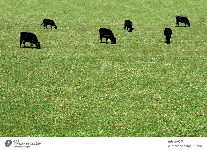 Muh! Kuh grün schwarz Rind Milchkuh Bauernhof Nutztier Landwirtschaft dunkel Säugetier Industrie cow cows Weide Kuhrasse Republik Irland Milcherzeuger Schatten