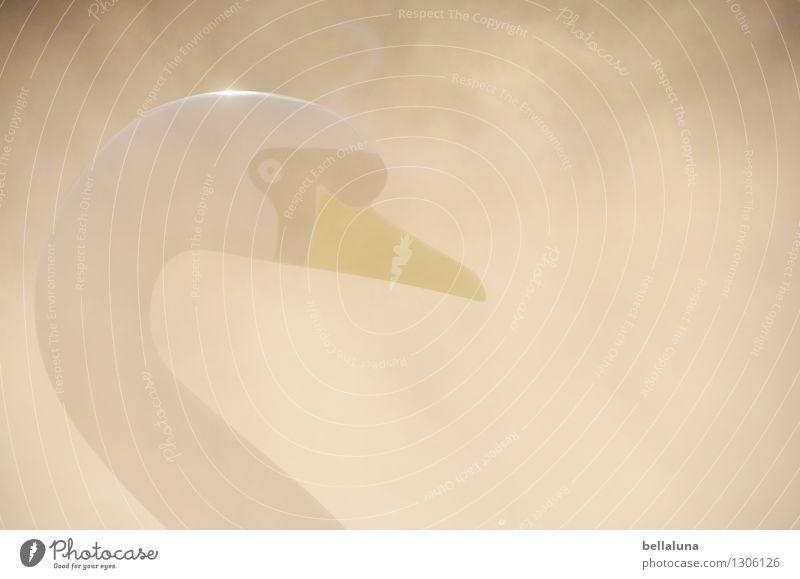 Nebulös Wasser Frühling Herbst Nebel Tier Wildtier Schwan Tiergesicht glänzend kalt gelb grau weiß Tretboot Skulptur Kunststoff Reflexion & Spiegelung Auge