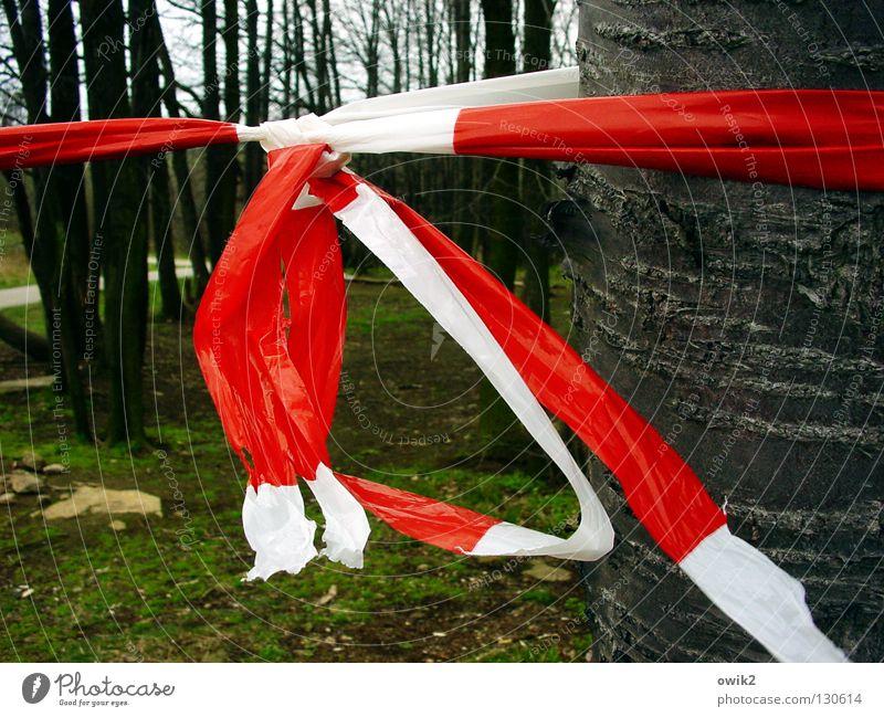 Tatort Umwelt Natur Baum Wald Wege & Pfade Stein Holz Zeichen Schilder & Markierungen Schnur Knoten hängen rot weiß Barriere rot-weiß Schutz Kunststoff