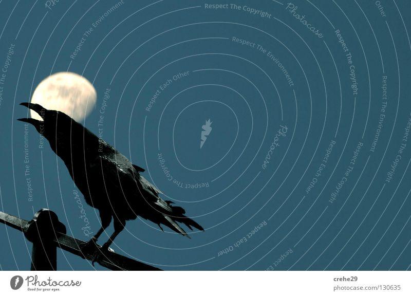 Bremer Nachtschicht blau schwarz Vogel Mond Rabenvögel Krähe