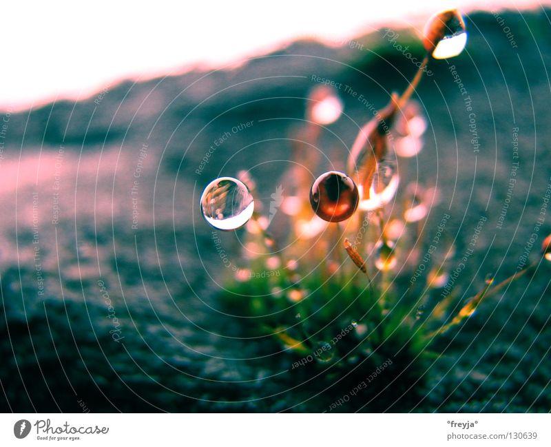 ohne moos nix los nass grün Frühling grau Wassertropfen Gefühle Stein Leben