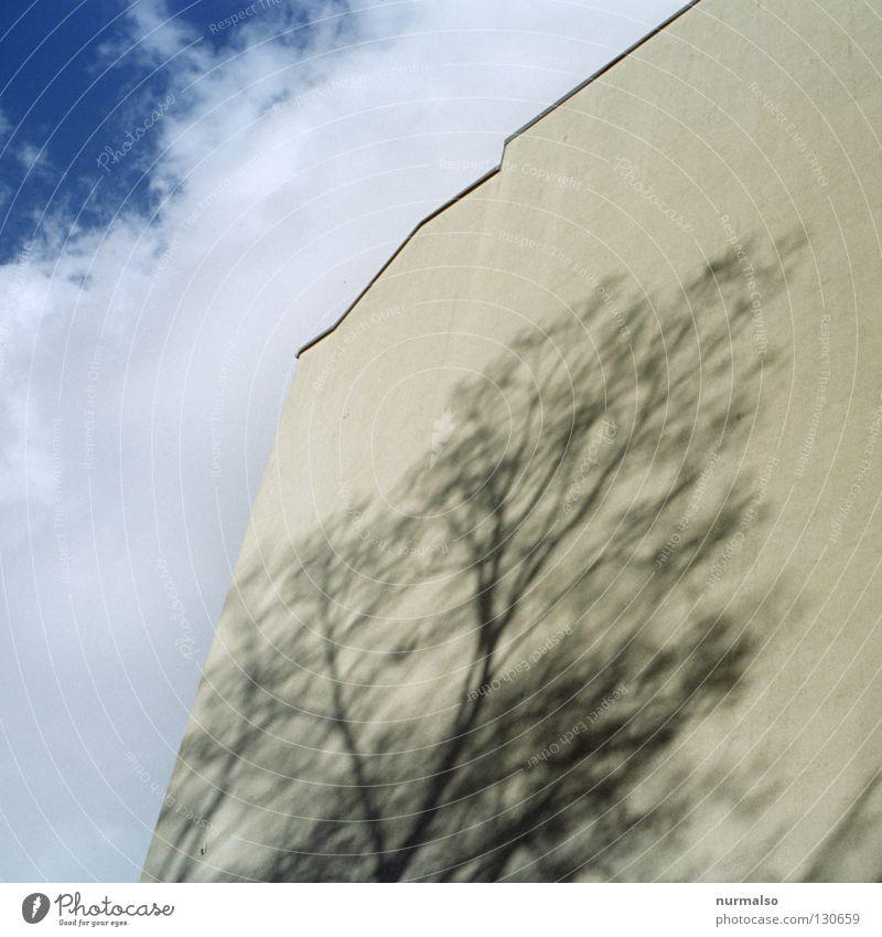 Schattenbaum I Baum Wand Fassade Wolken gelb Stadthaus Haus Dach Etage Anstrich laublos Licht Hochhaus Architektur Ast Himmel Brandmauer Baulücke hoch