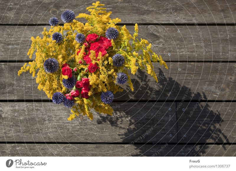 ein letzter Sommergruß blau Farbe Sommer Blume rot gelb Leben Rose Blumenstrauß Holzbrett verwittert
