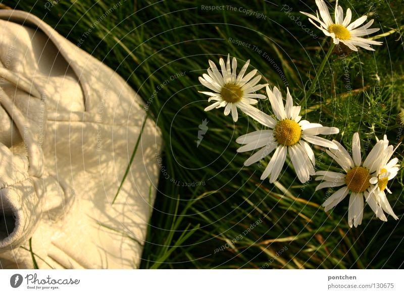 Spätsommer ruhig Ausflug Freiheit Sommer Natur Landschaft Pflanze Blume Gras Wiese Leder Tasche grün weiß friedlich Margerite Grad Celsius Farbfoto