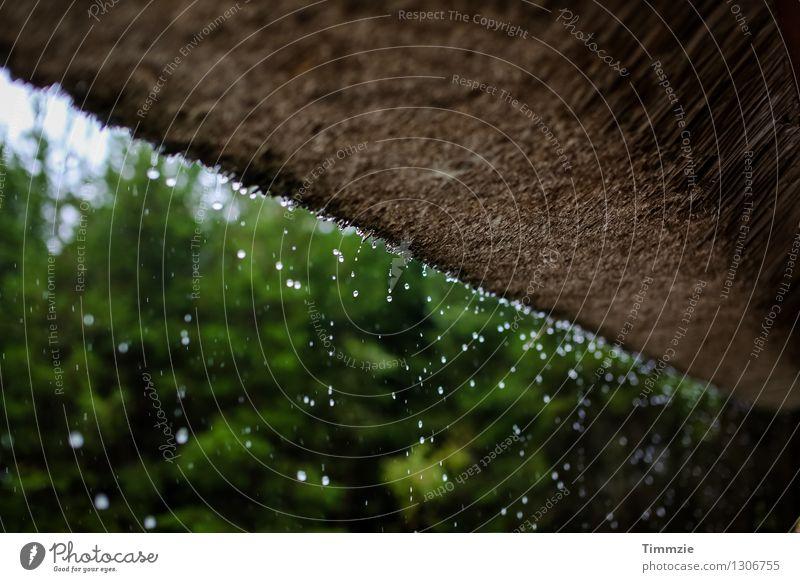 raindrops falling Pflanze Wasser kalt Regen Wetter Wassertropfen Dach Tropfen Hütte schlechtes Wetter