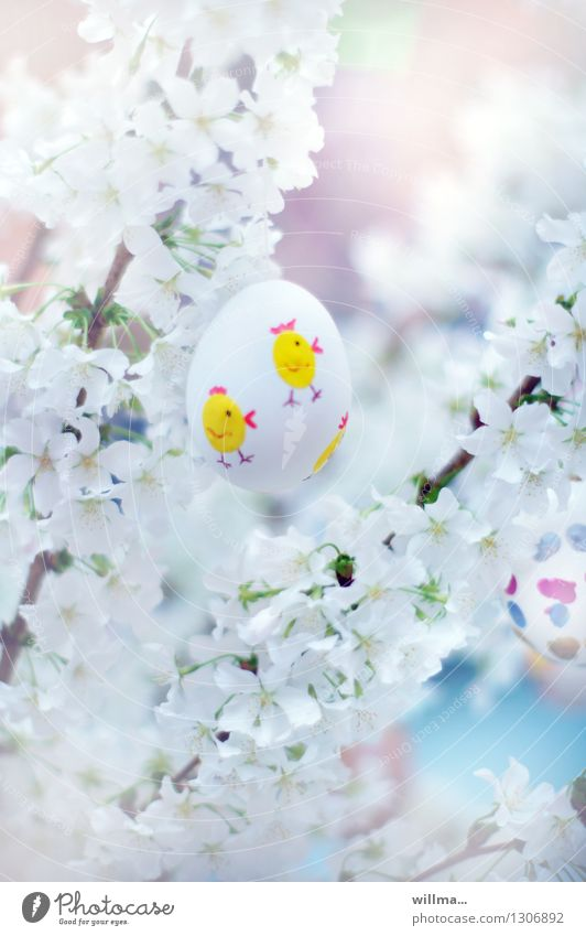 chicken running im blütenmeer weiß Frühling Ostern zerbrechlich bemalt Osterei Küken Kirschblüten Frühlingsfest