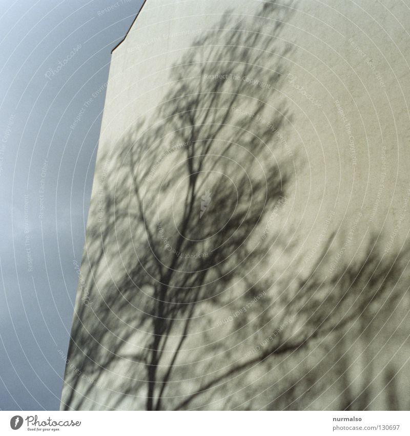 Schattenbaum II Himmel Baum Wolken Haus gelb Wand Architektur Fassade hoch Hochhaus Dach Feder Ast Jahreszeiten Etage Stadthaus