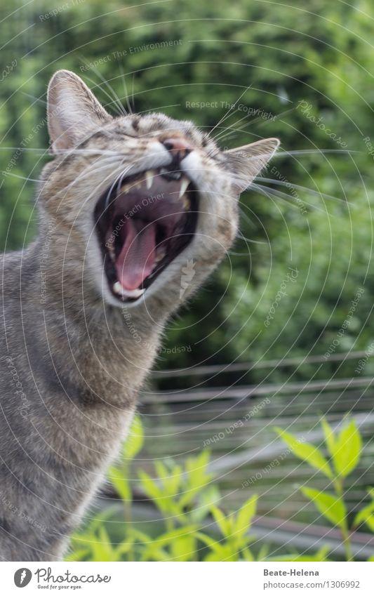 das musste echt mal raus ... Natur Pflanze Garten Tier Haustier Katze Tiergesicht außergewöhnlich bedrohlich fantastisch gigantisch braun grün Tatkraft