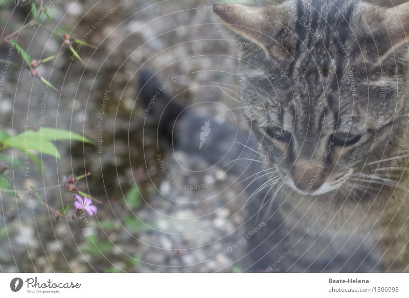 als wär's ein Traum Natur Pflanze Blatt Blüte Garten Wege & Pfade Tier Katze atmen beobachten Blühend Denken träumen warten Häusliches Leben ästhetisch einfach