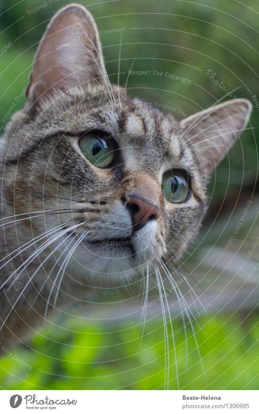 da verstehe noch eine/r die Welt Katze Natur grün Sommer Tier Leben Wiese Garten grau Häusliches Leben nachdenklich Kraft beobachten weich Freundlichkeit