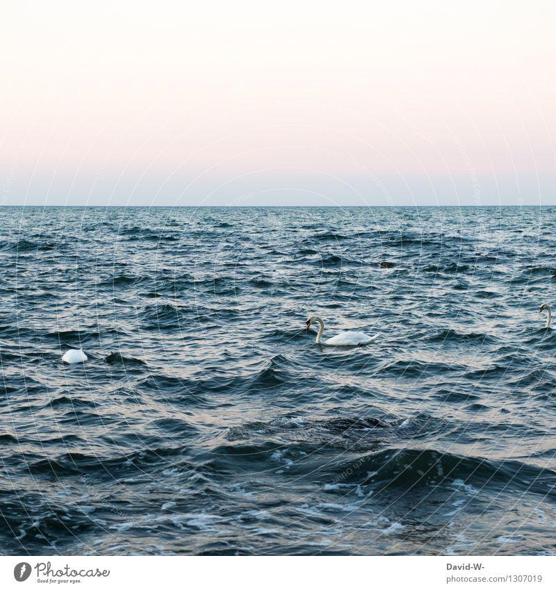 kümmerlich   in so riesigen Gewässern Umwelt Natur Tier Urelemente Wasser Wolkenloser Himmel Sommer Herbst Schönes Wetter Wellen Nordsee Ostsee Meer Wildtier