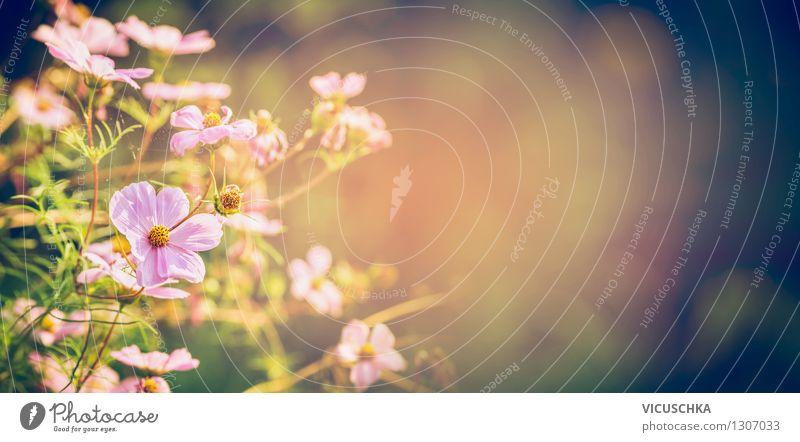 Herbst im Blumengarten Design Sommer Garten Natur Pflanze Sonnenlicht Schönes Wetter Blatt Blüte Park rosa Hintergrundbild Website Blumenbeet Unschärfe Romantik