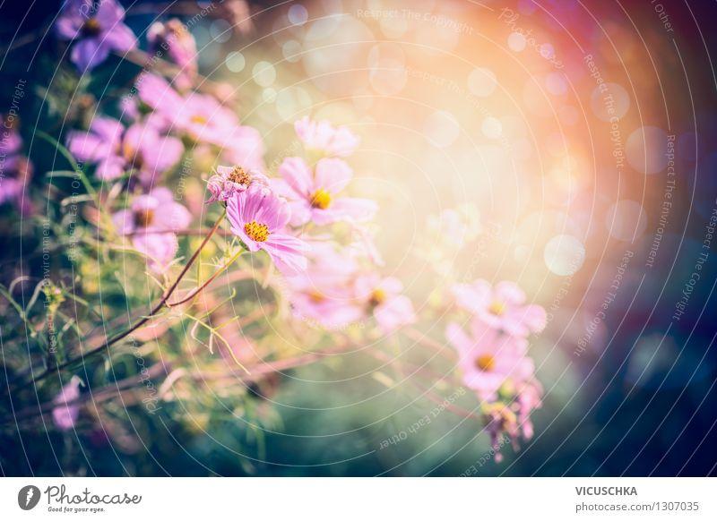 Rosa Blumen im Traum Garten Lifestyle Stil Design Sommer Traumhaus Natur Pflanze Sonne Sonnenaufgang Sonnenuntergang Sonnenlicht Frühling Herbst Schönes Wetter