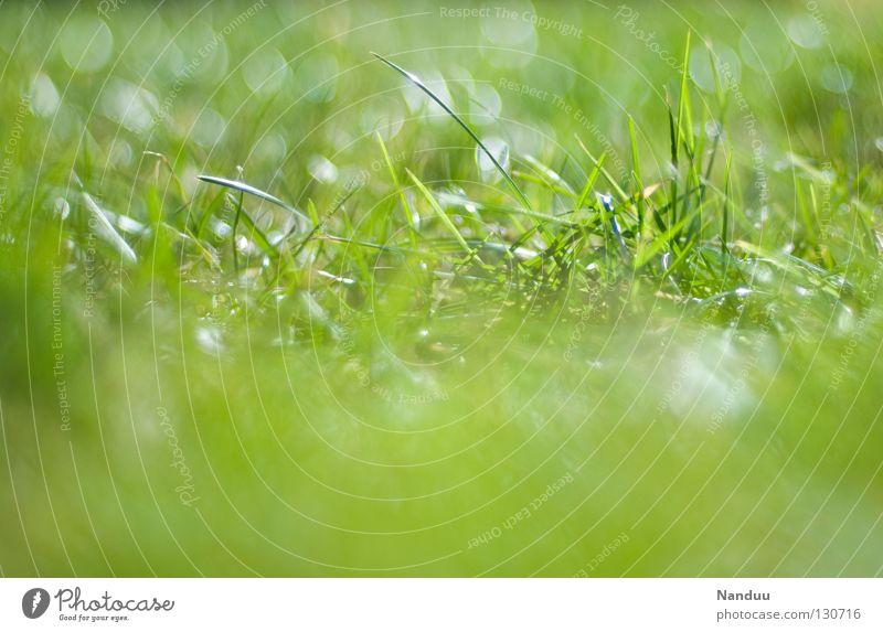 Er kommt! Wiese Sommer Frühling genießen Wohlgefühl Gras Halm Unschärfe Tiefenschärfe grün frisch Pflanze Wachstum Reifezeit drauße rumliegen draußensein