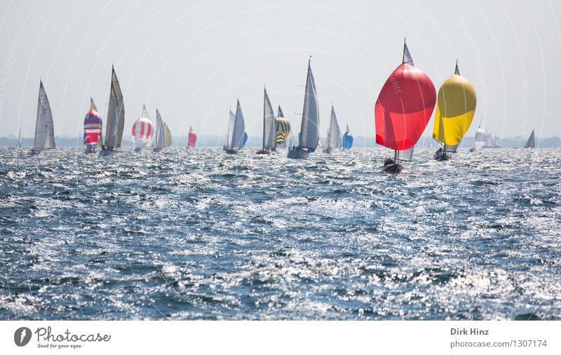 Bunte Konkurrenten Segeln Jacht frei maritim blau gelb rot elegant Erholung erleben Freizeit & Hobby Freude Horizont Ferien & Urlaub & Reisen planen Tourismus
