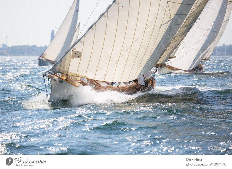Seestecher Segeln Jacht alt elegant frisch maritim blau ästhetisch Bewegung Erfolg Erholung Ferien & Urlaub & Reisen Freizeit & Hobby Freude Geschwindigkeit