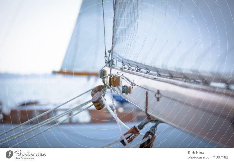 ausgebaumt Ferien & Urlaub & Reisen Sommer Meer Ferne Bewegung Holz Freiheit Horizont Freizeit & Hobby Tourismus elegant Ausflug Seil Abenteuer Ostsee
