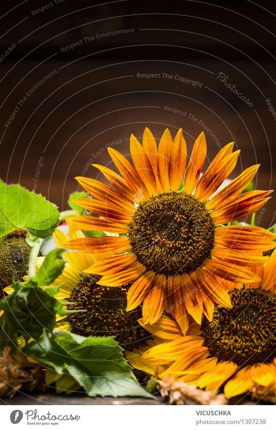 Sonnenblumen auf dunklem Hintergrund Natur Pflanze Sommer Blatt dunkel gelb Leben Blüte Herbst Stil Hintergrundbild Garten Design Dekoration & Verzierung retro
