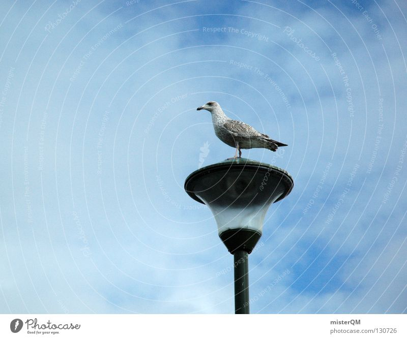 La Möwe. Himmel Meer Strand Wolken Lampe Vogel Küste klein Glas Pause nah Hafen Anschnitt Lachmöwe