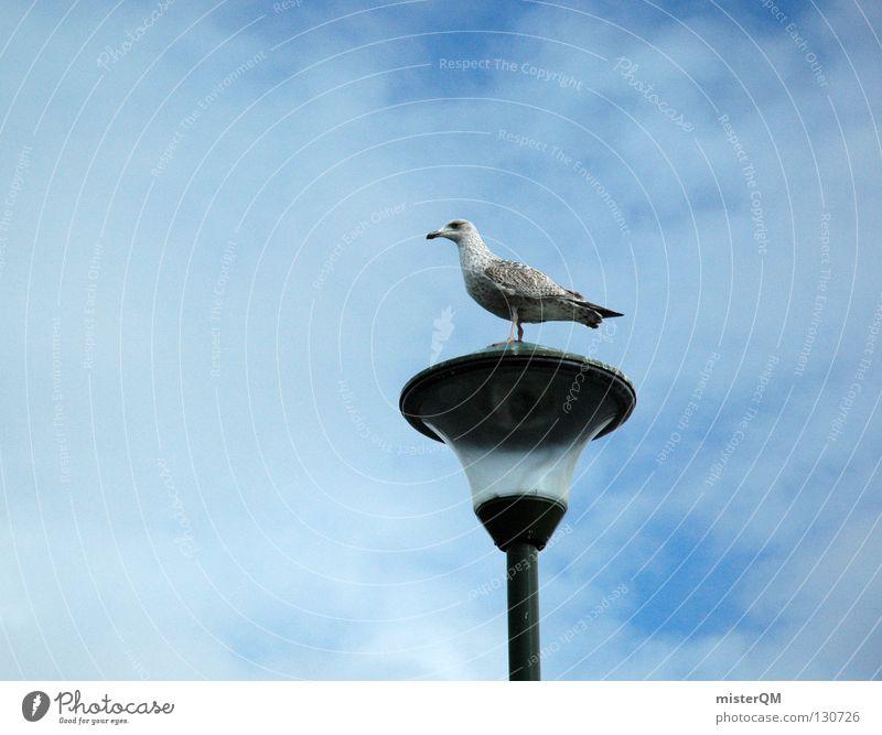 La Möwe. Vogel Lampe Pause Wolken Meer klein Lachmöwe Hafen Strand Küste niederlassen niedergelassen Glas Himmel Anschnitt Detailaufnahme break Vogelfamilie