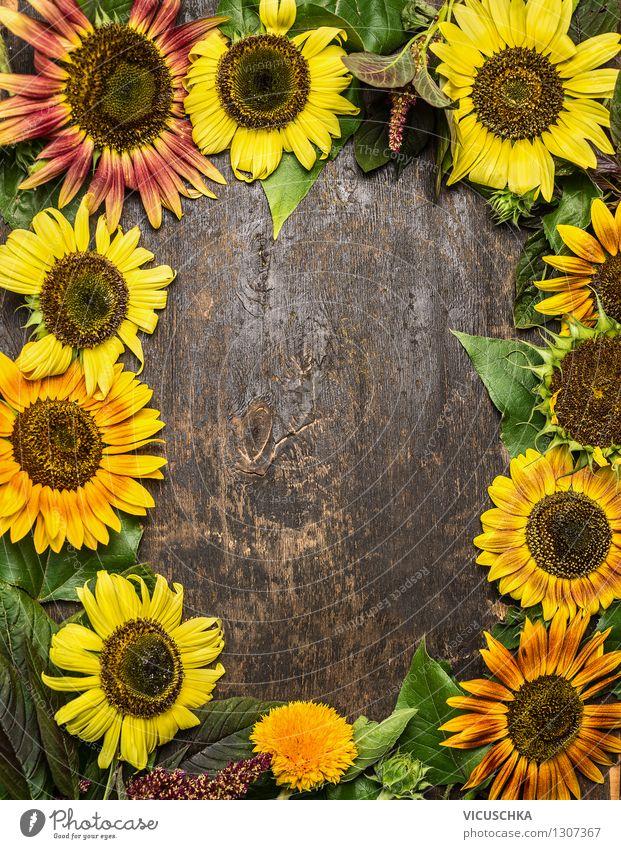 Hintergrund mit bunten Sonnenblumen Stil Design Leben Garten Tisch Natur Pflanze Sommer Herbst Blume Blumenstrauß retro gelb Hintergrundbild Top altehrwürdig