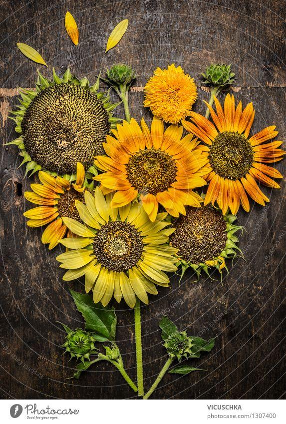 Sonnenblumen Composing elegant Stil Design Sommer Garten Natur Pflanze Herbst Blume gelb Hintergrundbild mehrfarbig reif Blatt Sonnenblumenkern Holztisch schön