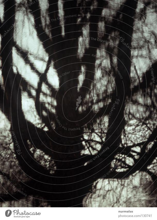 Finsterbaum Wasser schön Baum Winter Einsamkeit dunkel kalt Gefühle Stimmung Wellen Angst Ende einfach Ast Spiegel analog