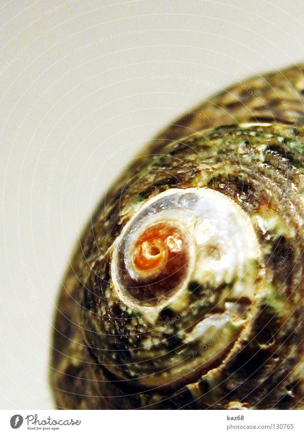 home sweet home Schneckenhaus Muschel Haus Spirale drehen rund Tier gedreht Meer See Meeresfrüchte Schraube Kalk Dekoration & Verzierung Schmuck finden