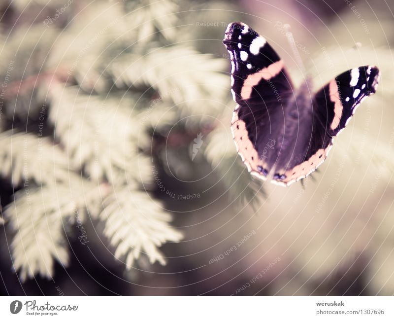 Rand eines Traums Natur Tier Wildtier Schmetterling Admiral 1 sitzen elegant einzigartig schön braun Stimmung Warmherzigkeit Sympathie friedlich Gelassenheit