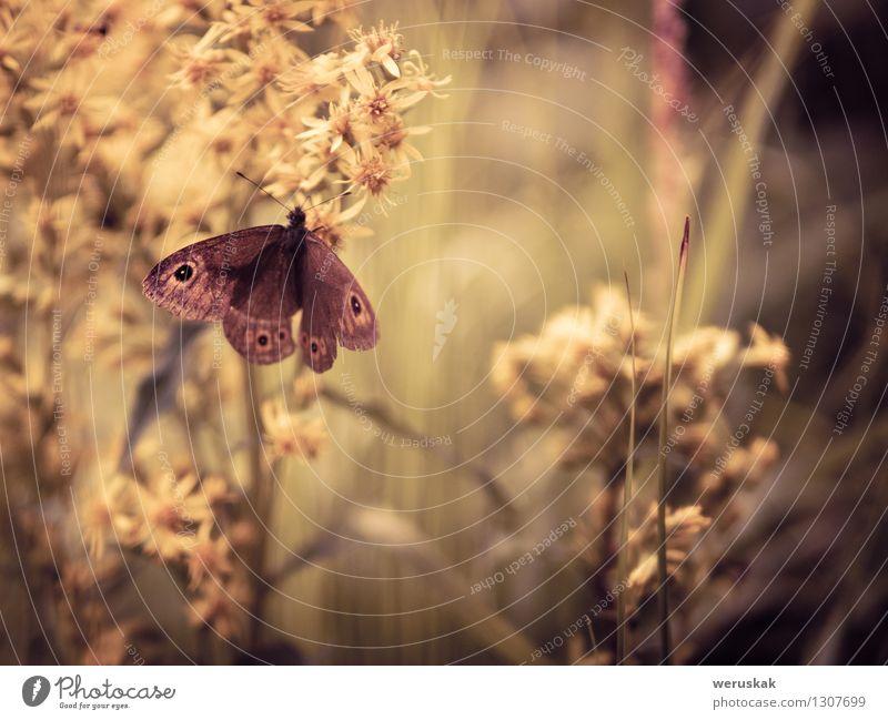 In der Umarmung der Natur Pflanze Tier Blume Gras Perforiertes Johanniskraut Wiese Wildtier Schmetterling Große Wand Braun sitzen Zufriedenheit Warmherzigkeit