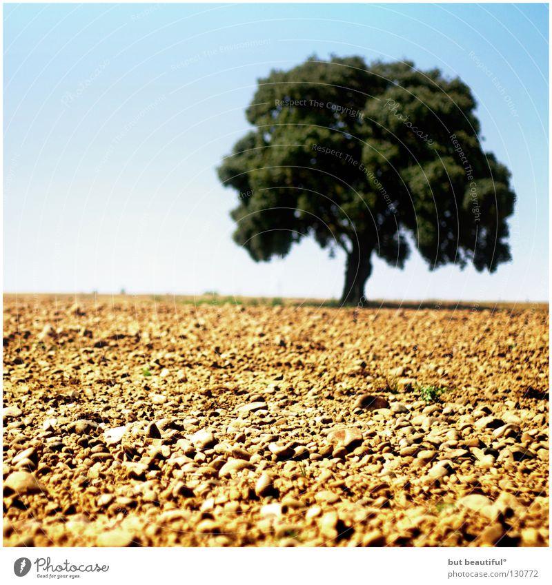 leben° Baum trocken Spanien heiß Sommer Physik Erde Sand Wüste Leben Landschaft Meseta Jakobsweg Camino de Santiago Wärme Durst