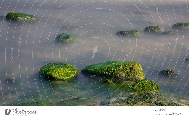 von Algen bedeckt Umwelt Natur Landschaft Pflanze Sand Wasser Sommer Klima Wetter Schönes Wetter Wind Nebel Moos Stein Hügel Felsen Wellen Küste Seeufer Strand