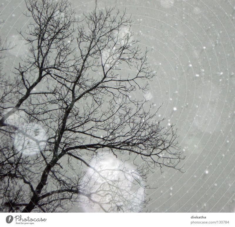 Aprilscherz Baum Winter ruhig kalt Schnee grau Schneefall Eis Wetter Ast Jahreszeiten durchsichtig Schneeflocke Flocke