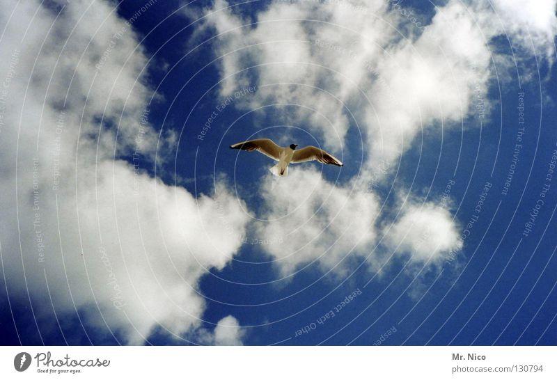 high Möwe Vogel himmlisch himmelblau Wolken schlechtes Wetter Brise Luft Luftverkehr Handzettel Spannweite ausbreiten Einsamkeit Schnabel fliegen Unendlichkeit