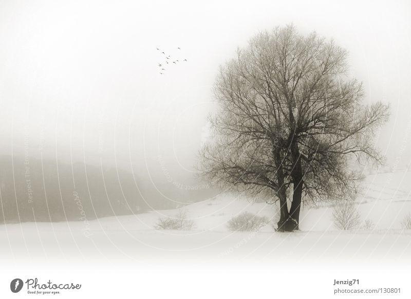 melancholisch - Nebelwinter. Baum Winter Schneelandschaft Monochrom Gelände Feld ungemütlich Natur Wetter Landschaft klat kalt Frost Traurigkeit Außenaufnahme