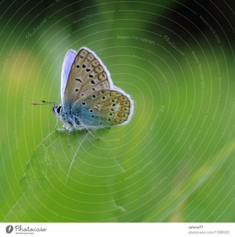 little blue Natur blau Pflanze grün Sommer Blatt Tier Umwelt Frühling Wiese Gras Glück klein frisch frei sitzen