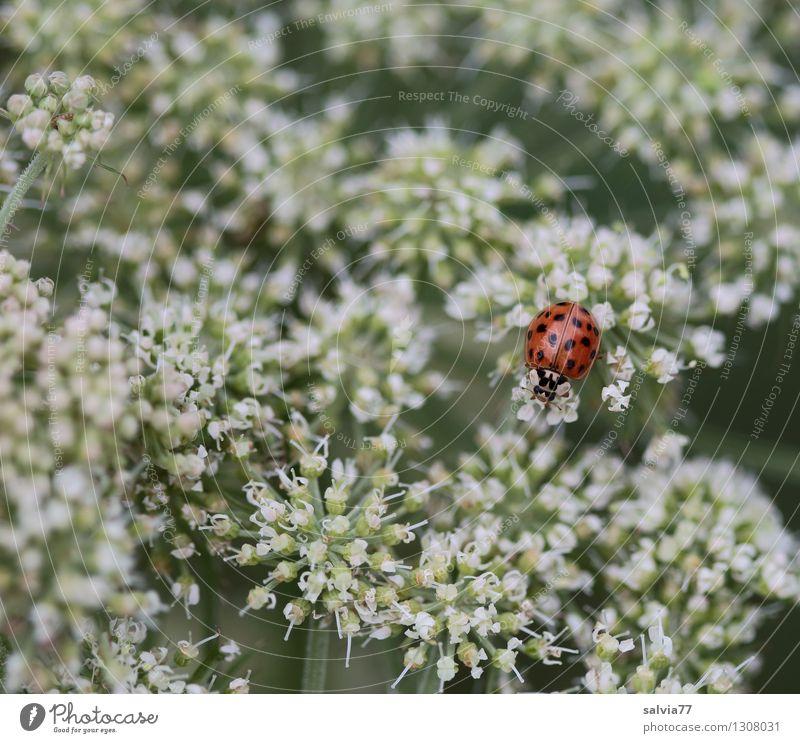 Farbtupfer Natur Pflanze Sommer Blume Tier Umwelt Blüte Frühling Gesundheitswesen Zufriedenheit genießen Blühend Wellness Wohlgefühl lecker gut